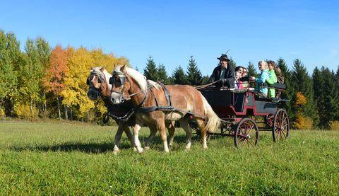 Neustift kennenlernen mit der Pferdekutsche