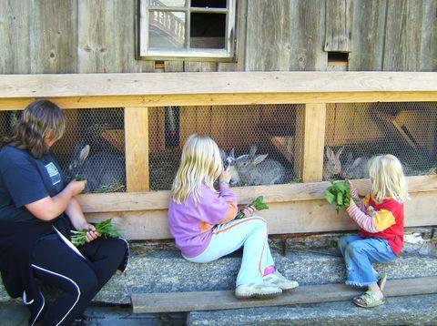 Urlaub in Neustift - Familie Matheis Weiss - Hasen füttern