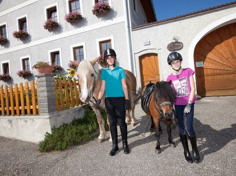 Urlaub in Neustift - Peinbauerhof - Pferde
