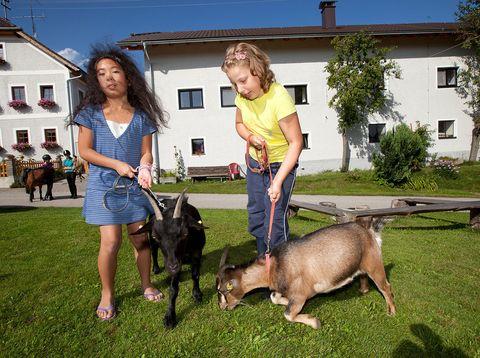 Urlaub in Neustift - Peinbauerhof - Ziegen