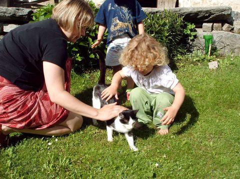 Urlaub in Neustift - Höllmühle - Katzen