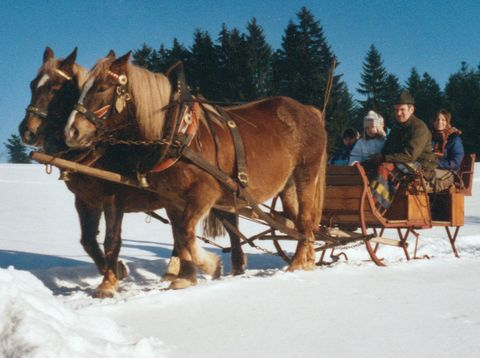 Urlaub in Neustift - Bio Bauerhof Stadler - Pferdeschlitten