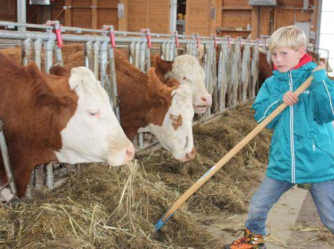Urlaub in Neustift - Familie Rauscher - Kuhstall