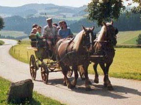 Urlaub in Neustift - Bio Bauerhof Stadler - Pferdekutsche